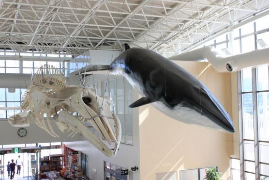 鯨賓館ミュージアム-0