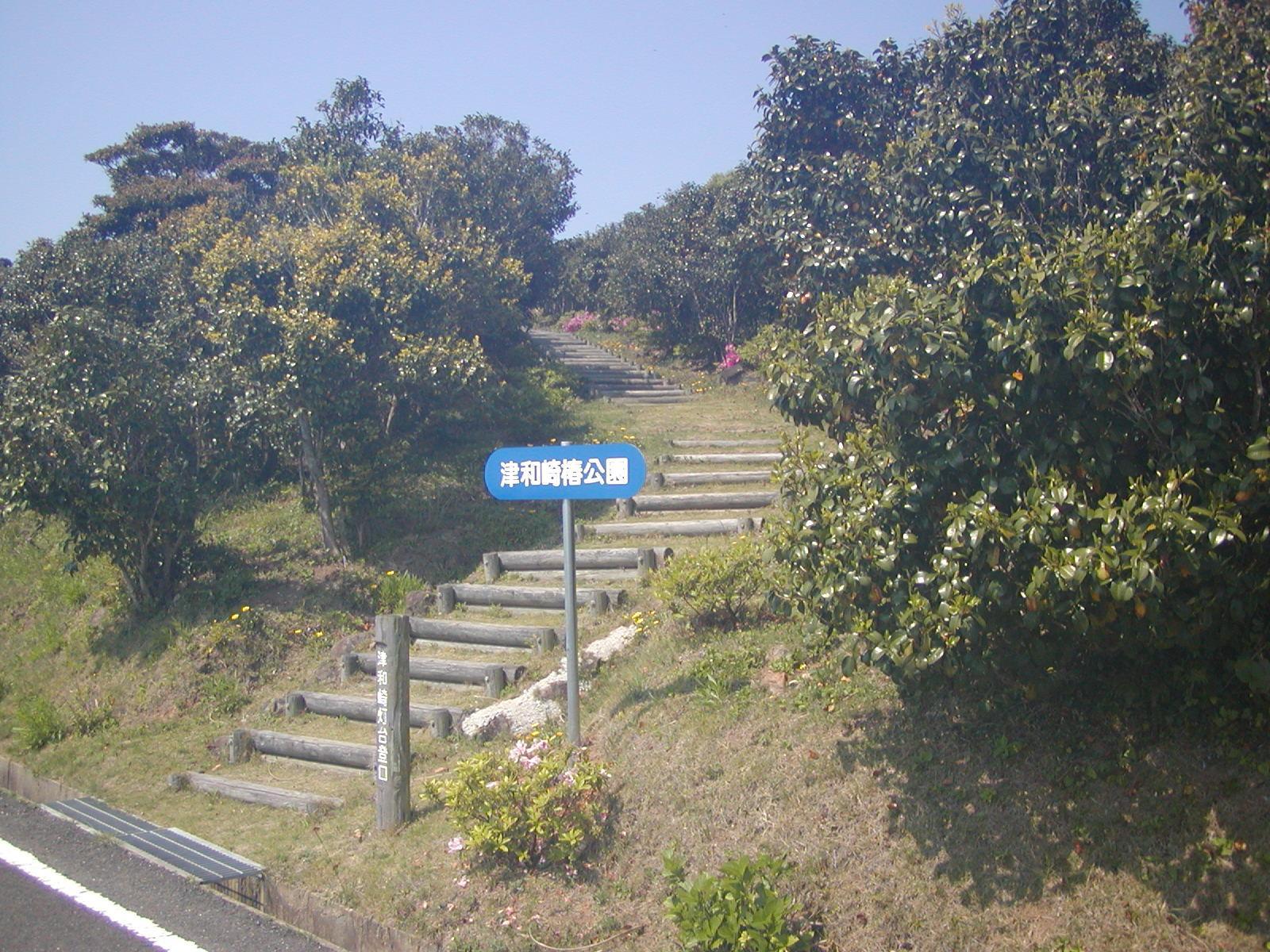 津和崎つばき公園-2